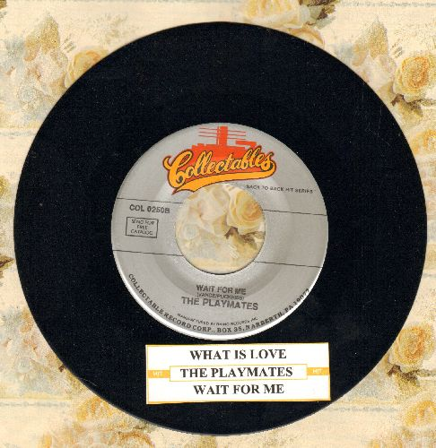 Playmates - What Is Love? (5 Feet Of Heaven & A Pony-Tail)/Wait For Me (double-hit re-issue with juke box label) - M10/ - 45 rpm Records